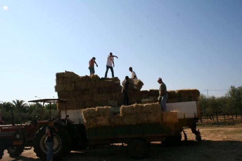 I pastori mentre caricano il fieno (F. Emanuela Flore)