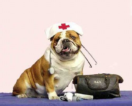 clinica veterinaria grugliasco pronto soccorso parma - photo#28